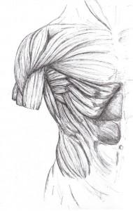 Renforcer les muscles profonds pour améliorer les muscles superficiels